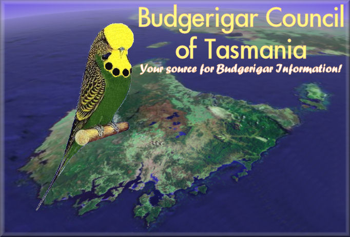 Budgerigar Council of Tasmania - Your source for Budgerigar Information!